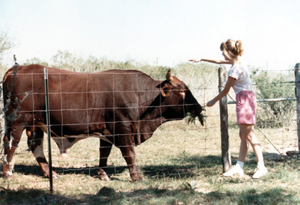 Judy friends with bull